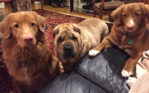 3dogs2